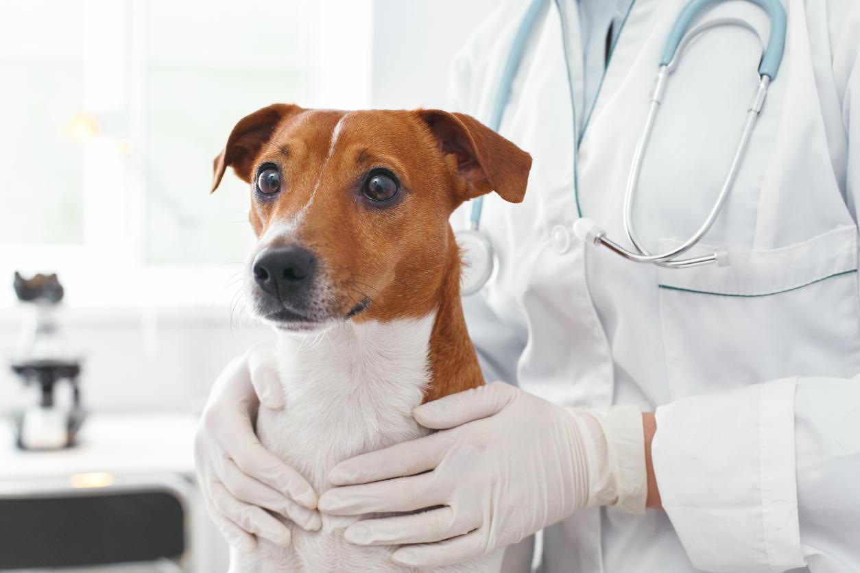vet comforting dog at the vet