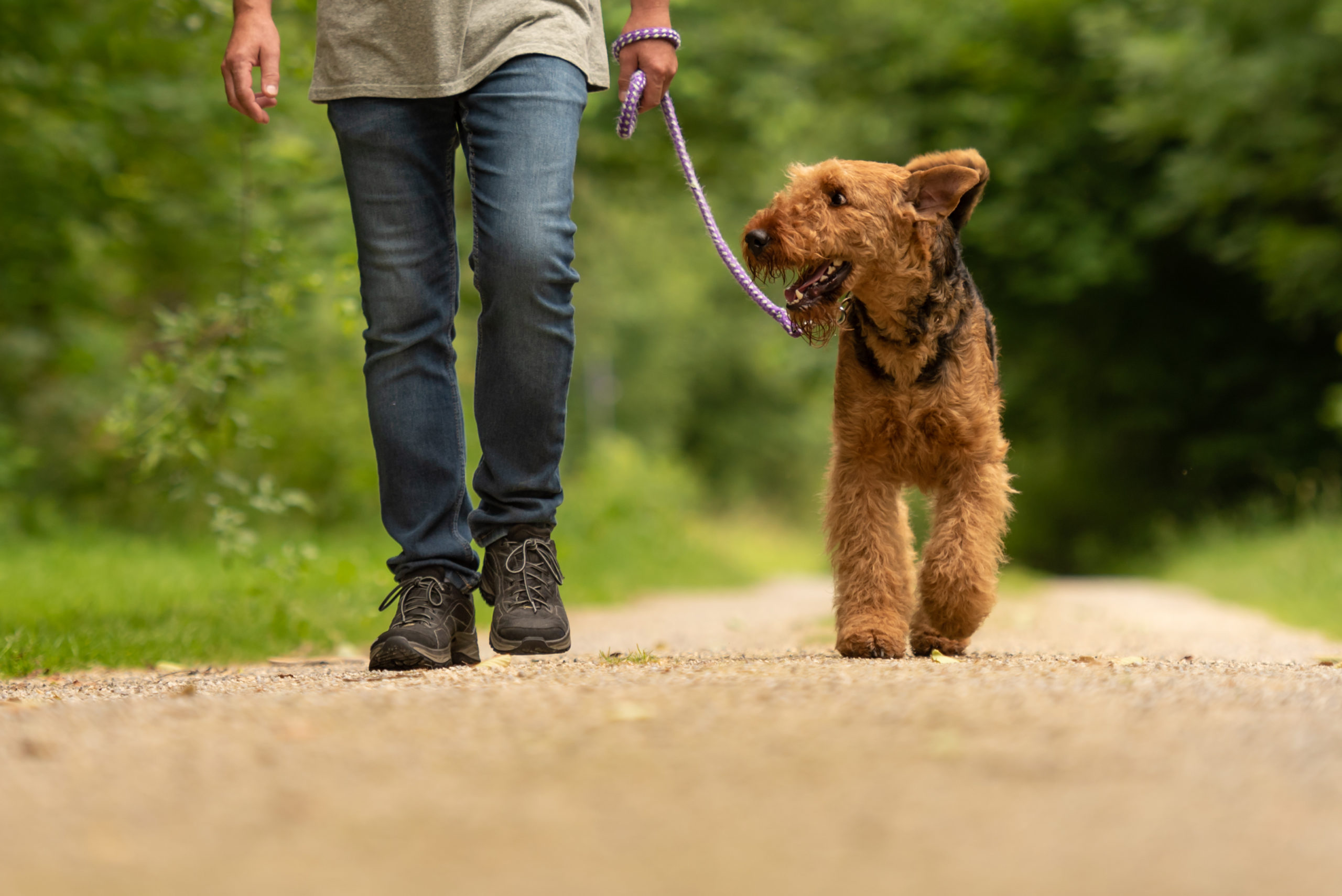 owner walking with dog at a dog park outside