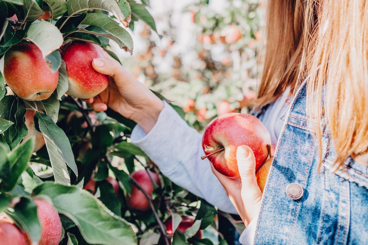 Girl in denim jacket picking apples