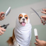 dog in a grooming session | mobile pet groomers in Arlington, VA
